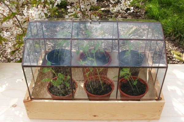 Keltető tiffany üvegház